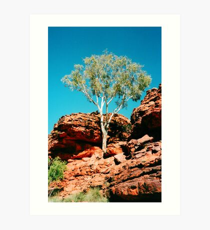 Outback Tree Art Print