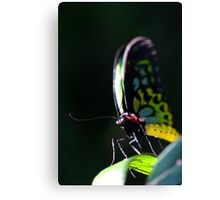 Butterfly #1 Canvas Print