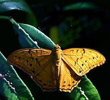 Butterfly #2 by Gavan  Mitchell