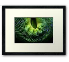 Snake Scales Framed Print