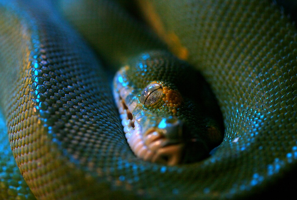Snake Eye by Gavan  Mitchell