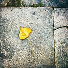 Yellow leaf by Silvia Ganora