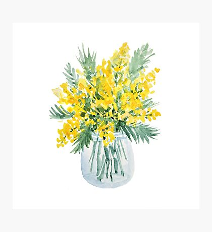 Yellow mimosa flowers bouquet watercolor painting Photographic Print