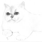 White cat by bitsdraw