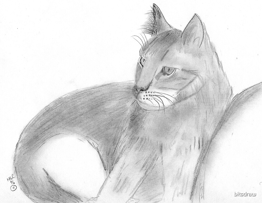 Cat by bitsdraw
