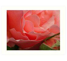 Delicate Pink Rose (Macro) Art Print