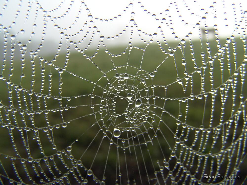 diamonds on a web by Sean Farragher