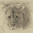 I am a cute cub of the Mhangeni pride! by jozi1