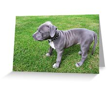 Gorgeous Baby, Blue Pit Bull Puppy Dog With Wrinkles Greeting Card