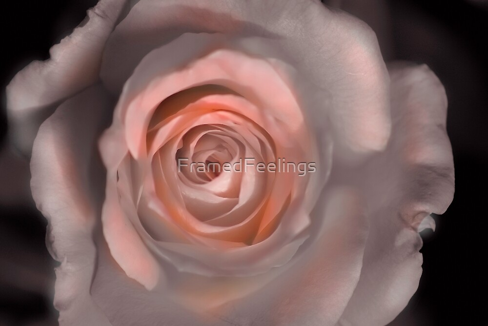 Pink sepia rose by FramedFeelings
