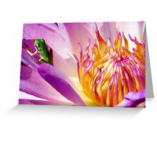 Frog on a Water Lilly Greeting Card