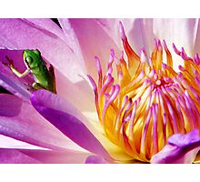Frog on a Water Lilly Photographic Print