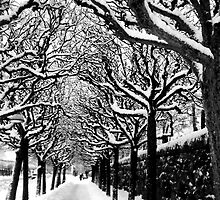 Winter Wonderland by Paige