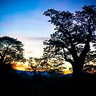Baobab Sunset by Tim Cowley