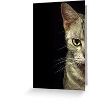 Beautiful Cat Portrait Greeting Card
