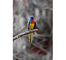 Bird On A Branch  Photographic Print