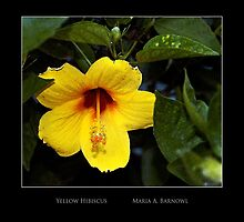 Yellow Hibiscus - Cool Stuff by Maria A. Barnowl
