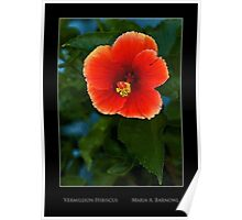 Vermillion Hibiscus - Cool Stuff Poster