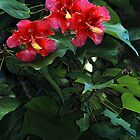 Vibrant Red Hibiscus by Maria A. Barnowl