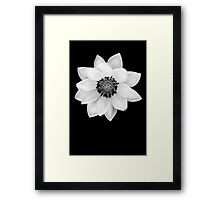 Black and White Gazania [Print and iPhone / iPad / iPod Case] Framed Print