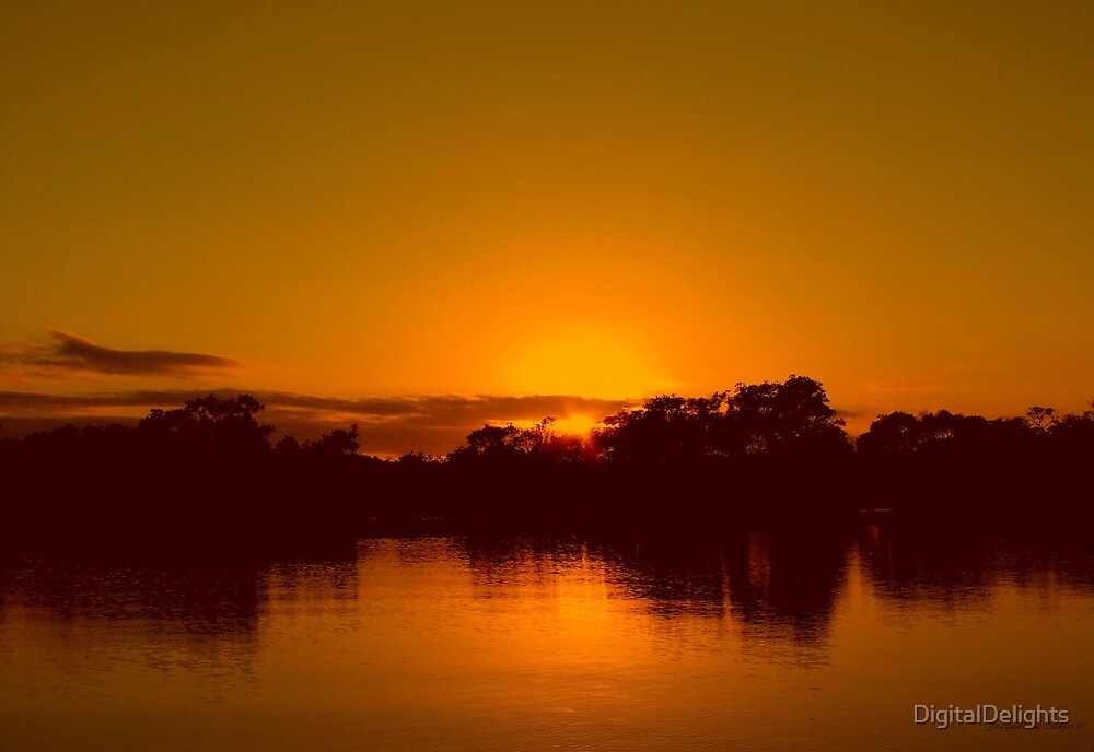 Orange Delight by DigitalDelights