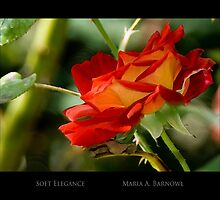 Soft Elegance - Cool Stuff by Maria A. Barnowl