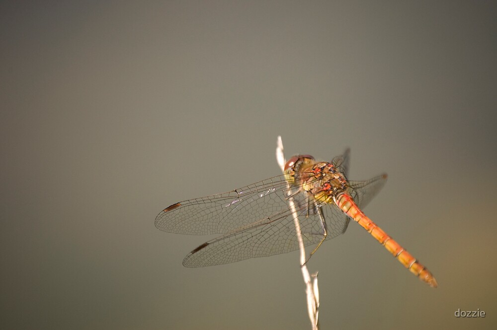 Dragonfly by dozzie