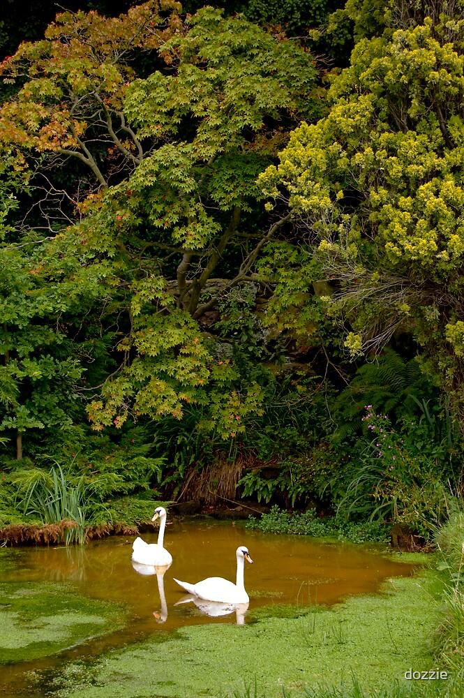Swan Lake ..... er ...... Muddy Pond by dozzie