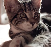Alert Kitten by dozzie