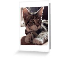 Alert Kitten Greeting Card