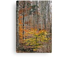 The End of Fall Canvas Print