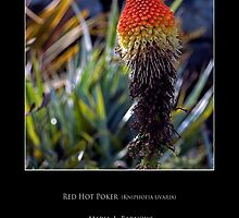 Red Hot Poker - Cool Stuff by Maria A. Barnowl