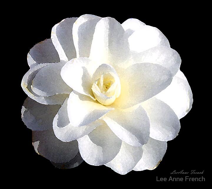 Camelia by Lee Anne French