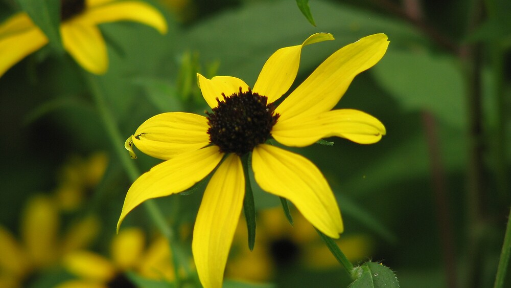 Yellow Flower by IndyLady