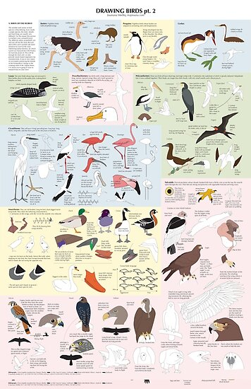 Drawing Birds 2 by Joumana Medlej