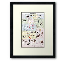 Drawing Birds 2 Framed Print