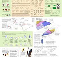Drawing Birds 1 by Joumana Medlej