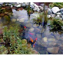 Garden Koi Pond Photographic Print