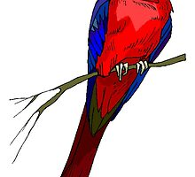 Red Macaw Parrot by kwg2200