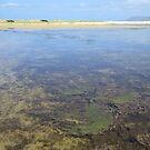 Wetland Waters by Judi Rustage