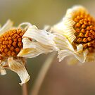 SIGNS OF FALL by Betsy  Seeton