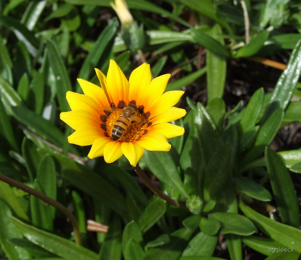 buzz by aggieeck