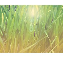 Abstract grass background 2 Photographic Print