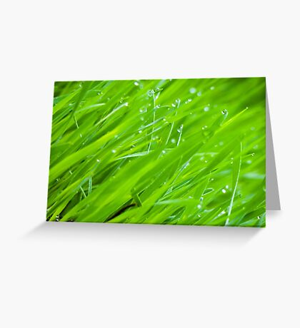 Fresh Green Grass 2 Greeting Card