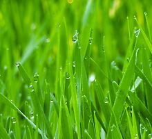 Fresh Green Grass 3 by AnnArtshock