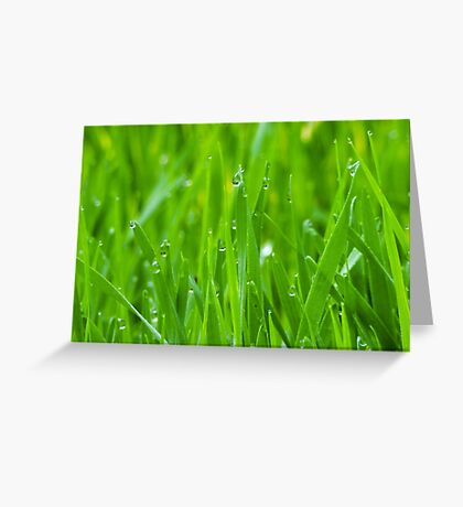 Fresh Green Grass 3 Greeting Card