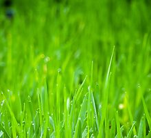 Fresh Green Grass 4 by AnnArtshock