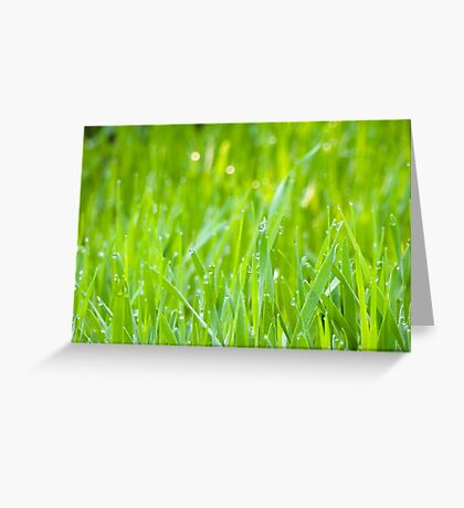 Fresh Green Grass 5 Greeting Card
