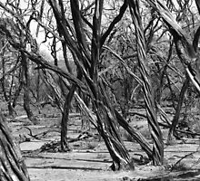Burnt Out Parkland by Nigel Roulston