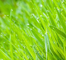Fresh Green Grass 6 by AnnArtshock
